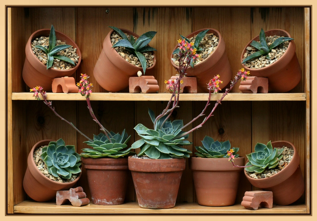 Pflanzen sind für den frostfreien Wintergarten